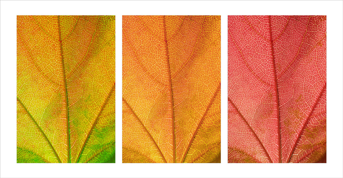 Blätter_Wandlung