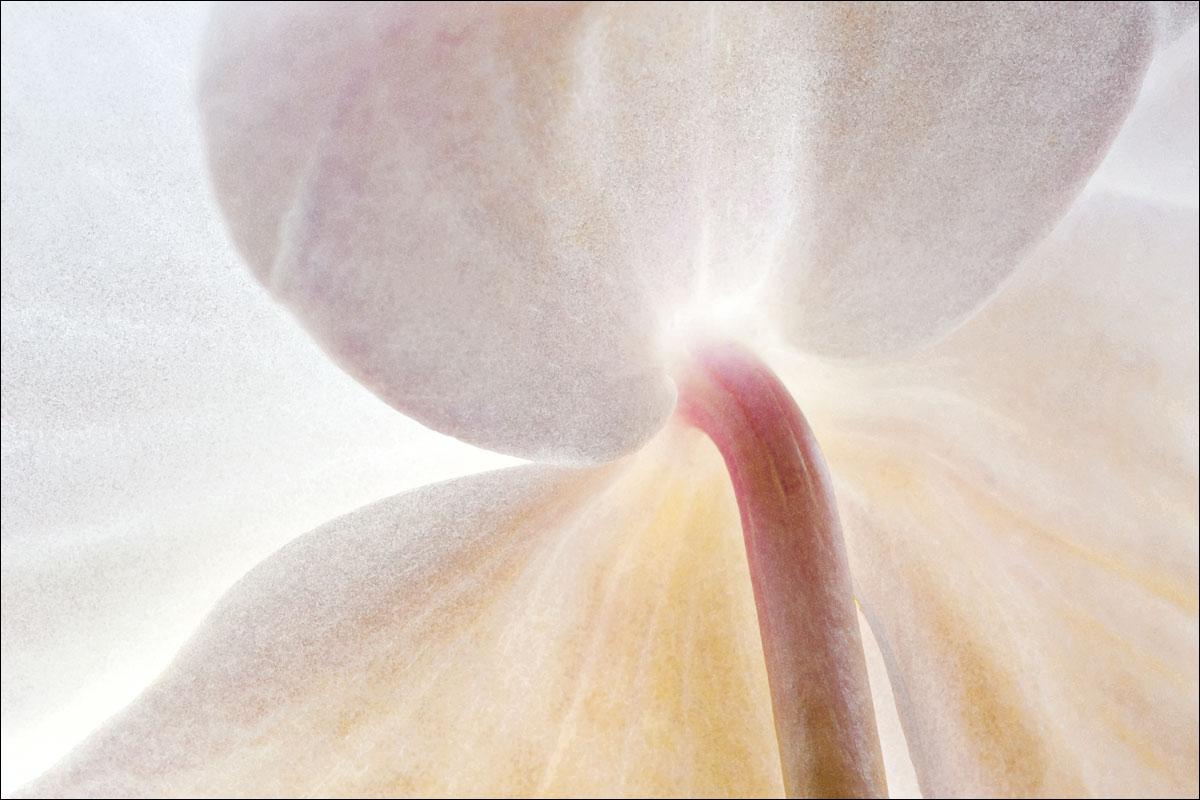 Orchidee_2